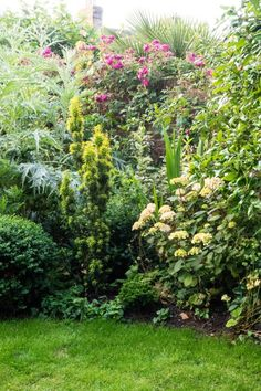 Why garden planting schemes in small gardens are different from planting ideas in large gardens Small Garden Borders, Narrow Garden, Big Garden, Small Garden Design, Garden Modern, Plants For Small Gardens, Large Plants, Cool Plants, Nigella