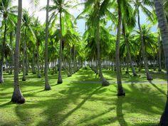 Rangiroa Atoll, French Polynesia