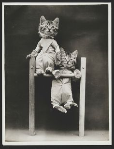 Two kittens on a pull-up bar, 1914