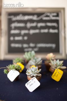 Mini potted plant placecards by Floral Fields of Burbank, California. #placecards #succulents #weddings #creativeideas