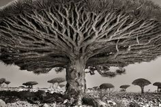 "Beth Moon, ""Ancient Trees: Portraits of Time."