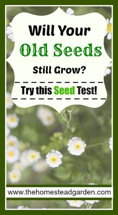 Learn how to check the viability of old seeds in this post. Live a frugal life by using your old seeds whenever possible. This simple test…