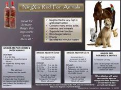 Young Living NingXia Red for Animals: Bird, Cat, Dog, Horse Enroller & Sponsor ID Essential Oils Dogs, Essential Oil Uses, Young Living Essential Oils, Ningxia Red Benefits, Young Living Pets, Failure To Thrive, Oils For Dogs, Yl Oils, Living Oils