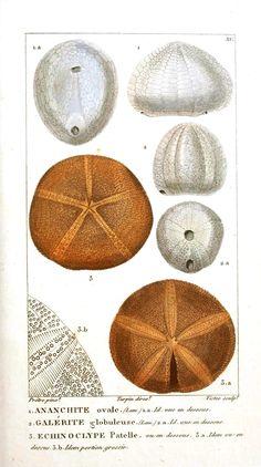 {vintage sea shell printables} tons of free printables