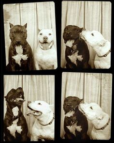 This is how geeky dogs would use Photobooth.