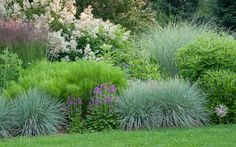 A lovely, cool-toned border garden with tall Giant Fleeceflower/ Persicaria, blue oat grass, purple blooms on Stachys officinalis, and a funny puff-ball Allium christophii (self sown, front right)  by Country Gardener