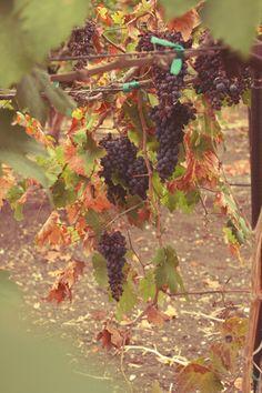 A Field Journal: Autumn Harvest