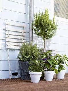 #balcony #plants #garden #natural #styling #decor #Scandinavian #pots