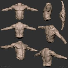 Zbrush torso study by Sandpiper Zbrush Anatomy, 3d Anatomy, Human Anatomy Drawing, Anatomy Sketches, Anatomy Poses, Muscle Anatomy, Body Drawing, Life Drawing, Drawing Faces