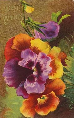 Pansies greeting card - 1900