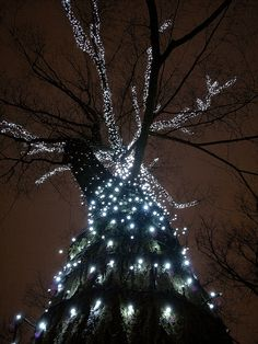 Star Shining Tree, Helsinki, Finland