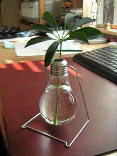 Reutilizando Lampadas Incandescentes #sustentabilidade http://www.ecobacana.com.br/2013/04/reutilizando-lampadas-incandescentes.html