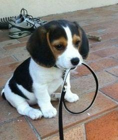 I'm Waiting! #puppy #cuteness