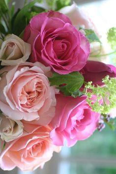 valentine roses....
