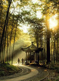 sentier de bamboo dans le forêt de Yunqi