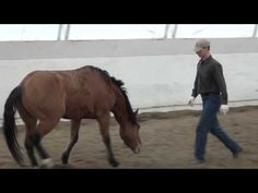 'Ground Work'- Priceless Horse Training This is awesome!! i wish i could get my horse to do this!!