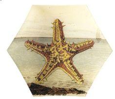 Derian starfish plate -