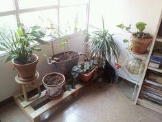 Nuevo rincón de plantas en mi estudio.