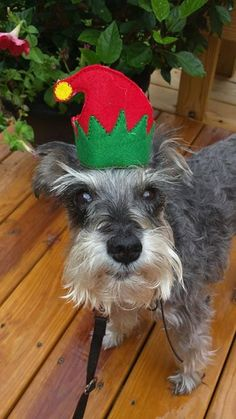 Dog Cat Elf hat for Pets Christmas Ha by BowWowPetWear on Etsy