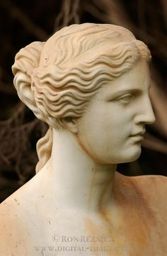 Venus de Milo Sculpture portrait