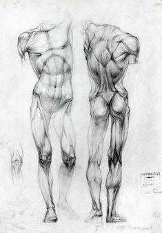Human Body Art Male Figure Drawing Reference 25 New Ideas Human Anatomy Drawing, Anatomy Study, Human Body Drawing, Human Sketch, Human Anatomy For Artists, Human Body Art, Human Body Anatomy, Male Figure Drawing, Life Drawing