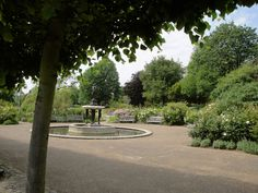 Day 7: Rose Garden at Hyde Park