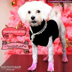 Fashion Friday: Sparkle the Posh Pup  Want your fashionable pet to be featured on ComeWagAlong.com? Click pin to view blog post for more info and learn all about Sparkle the Posh Pup! #fashion #fashionfriday #dogfashion #maltese #dogs #dogclothes