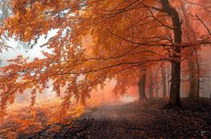 11 Most Beautiful Forests in The World
