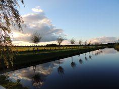 Jonge boompjes naast de Haven in Surhuisterveen. Friesland The Netherlands