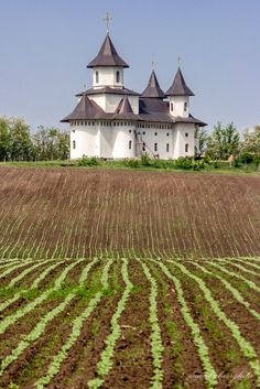 Lines - Miclesti, Vaslui Place Of Worship, True Beauty, Vineyard, Europe, Country, City, Places, Happy, Outdoor
