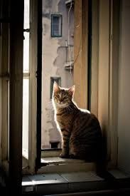 cat on window sill photo - Google Search