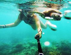 Try to be like the turtle - at ease in your own shell shot from yesterday's diving trip to the Great Barrier Reef. No words to describe this beauty of nature under water #turtle #diving #goprooftheday #happy #girl #seafolly #bikini #gopro #greatbarrierreef #cairns #australia #enjoy #life #smile #laugh #live #picoftheday #instagood #instadaily #world #travel #ocean #nature #beauty #nowords #12daysleft by o0oannio0o http://ift.tt/1UokkV2