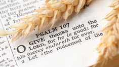 Thanksgiving Bible Verses Read Scripture on why we should give thanks and how to express gratitude. You can find many instances in the Bible that talk Thankful Bible Verses, Thanksgiving Bible Verses, Good Scriptures, Bible Verses For Kids, Happy Thanksgiving, Best Bible Quotes, Best Bible Verses, Godly Quotes, Learn The Bible