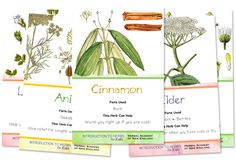 Herbal Flashcards for Kids - Download for Free / more activities and printables in Introductory to Herbs for Kids series!