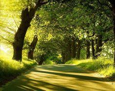 Gorgeous path..