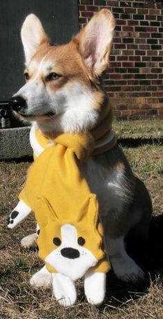 oh my goodness! A corgi scarf on a corgi! In(corgi)ception of cute!!