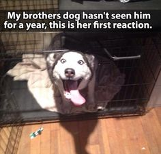 Dump A Day Attack Of The Funny Animals - 25 Pics