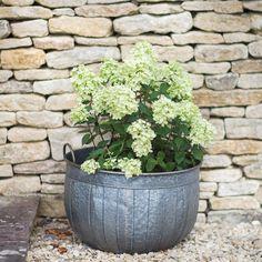 tub planter - Google Search