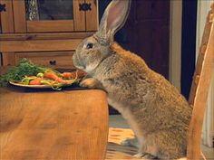 the biggest bunny in the world, Darius.