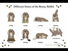 Gemoedstoestand van een konijnthe