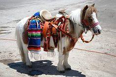 c342bb3ea1 76 Best Pony Love images