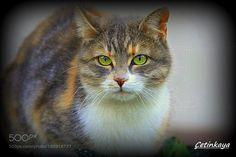 Green eyes by Minasetinkaya #animals #animal #pet #pets #animales #animallovers #photooftheday #amazing #picoftheday