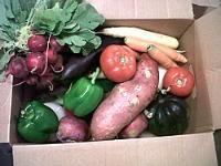 Farm Fresh RI Veggie Box: a convenient, inexpensive way to get RI grown veggies to you and your family!