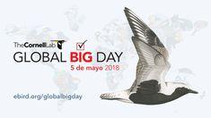 Se acerca el #GlobalBigDay, 5 de mayo. En 2017, cerca de 20.000 personas de 150 países observaron 6.659 especies de aves en un solo día (alrededor del 60% del mundo). Colombia se alzó como campeón de la jornada con un total de 1.486 especies de aves registradas. #GlobalBigDayColombia #ConexiónBiohttp://conexionbio.jbb.gov.co/lo-que-debes-saber-sobre-el-global-big-day/