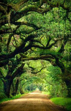 Beautiful World, Beautiful Places, Landscape Photography, Nature Photography, Edisto Island, Tree Tunnel, Botany Bay, Unique Trees, Nature Aesthetic