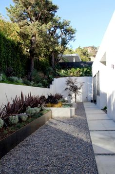 Idea For Walkway To Replace Sanseveria Doheny Estates Modern Landscape Los Angeles Foundation Landscape Design Soft Succulents And Pebble Ground