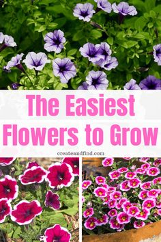 The easiest flowers to grow.  Anyone can plant these beautiful varieties for waves of color all summer #easyflowerstogrow #flowers #plants #gardening