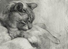 Michael John Davis - Sleeping Cat - 2010 Charcoal on Paper.