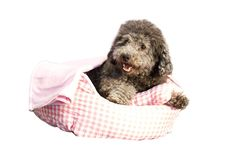 Danazoo Polyester 3-Piece Cuddler Pet Bed Set, Pink *** Learn more by visiting the image link. (This is an affiliate link and I receive a commission for the sales)