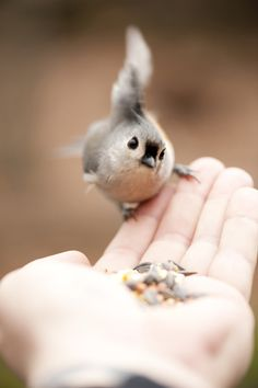 Little flirty birdy  <3